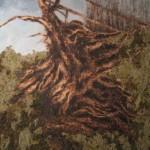 Skeleton of Burned Cottonwood Roots Renewal